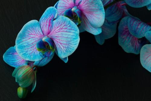 bukiet-fioletowych-orchidei