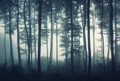 drzewa-na-skraju-lasu-we-mgle