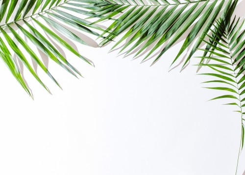 liscie-palm-areki