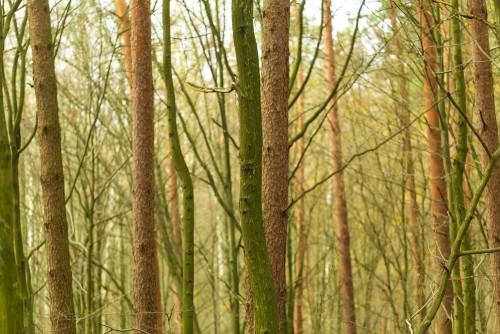 pnie-drzew-w-lesie-zielony-filtr