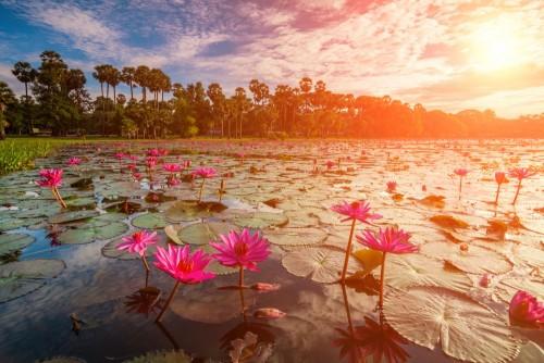 swit-nad-jeziorem-z-lotuses