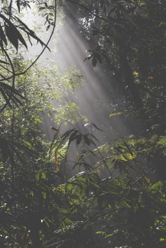 promienie-slonca-w-lesie-deszczowym-na-sri-lance