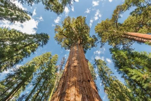 ogromne-drzewa-w-parku-narodowym-sekwoi-kalifornia-usa