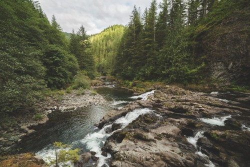 rzeka-w-bujnym-lesie