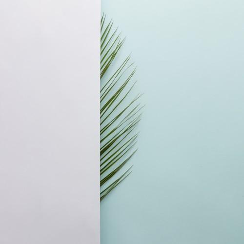 lisc-palmy-na-jasnym-tle-minimalna-koncepcja-tropikalne-mieszkanie-swieckich