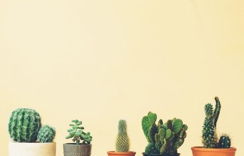 kaktusowe-szczyty-na-stonowanym-zoltym-tle