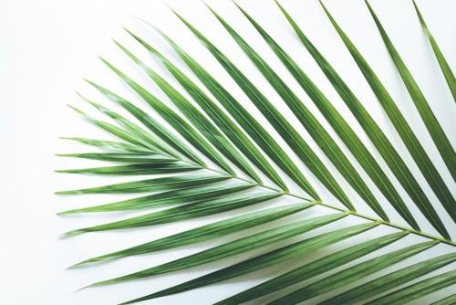 real-tropikalni-lisci-tla-na-bielu-nieatutowy-natury-pojecia-plascy-nieatutowi