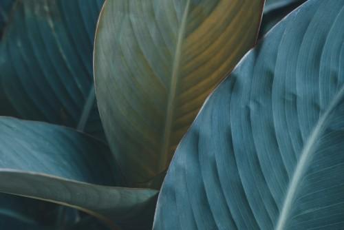zielone-liscie-tekstury