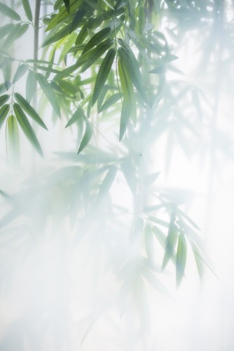 zielony-bambus-w-mgle-z-lodygami-i-liscmi-za-oszronionym-szklem