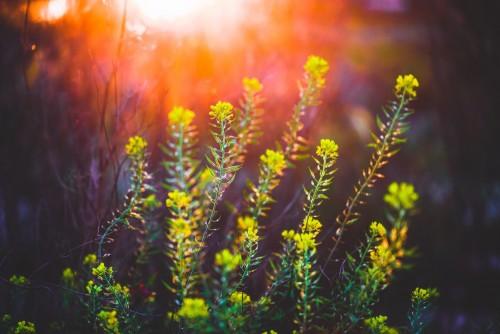 wiosenne-kwiaty-na-kwitnacej-lace