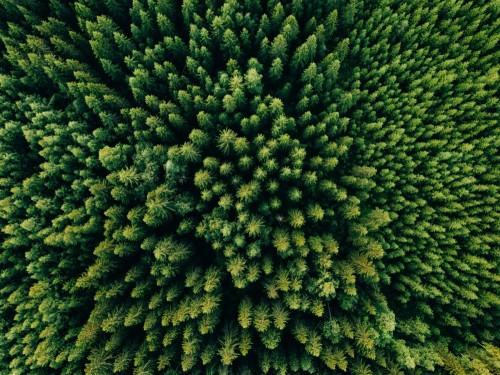 widok-z-lotu-ptaka-odgorny-lato-zieleni-drzewa-w-lesie-w-wiejskim-finlandia
