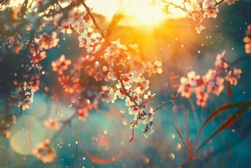 wiosenne-paki-kwiatow