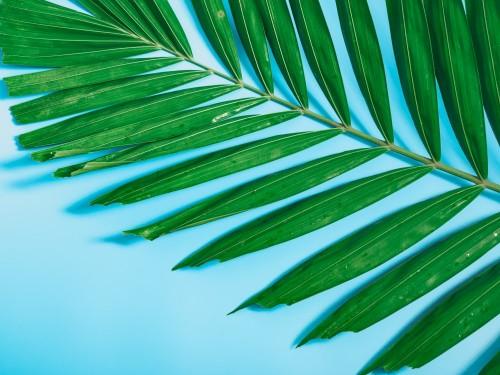 tropikalne-lato-flatlay-i-minimalne-pojecie-z-tekstury-lisci-palmowych-umiescic-na-niebieskim-tle-pastelowych-z-miejsca-kopiowania