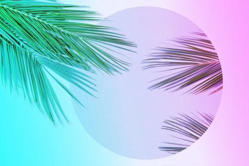 liscie-palmowe-tropikalne-w-zywe-kolory-gradientu-neon