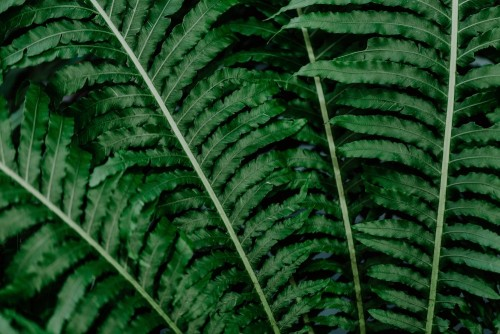 zblizenie-zielone-tropikalne-rosliny