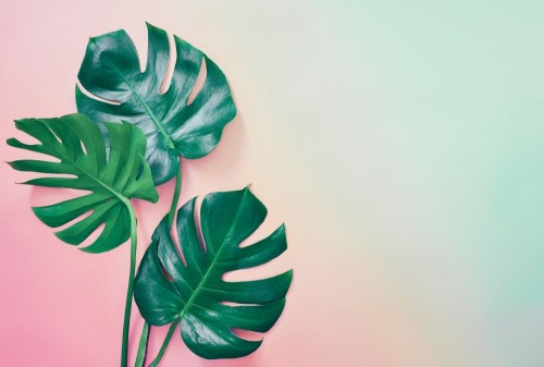 lato-tropikalny-tlo