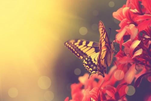 piekny-motyl