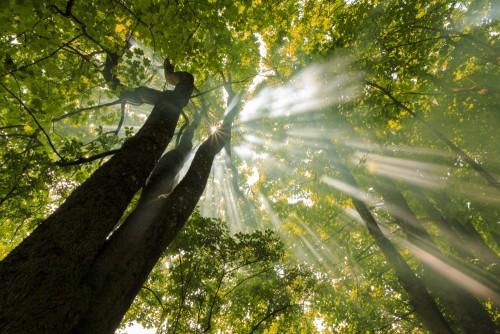 mglisty-lasowy-slonce-promieni-scenerii-zielony-naturalny-piekno-w-polnocnej-polska