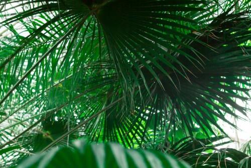 mokry-las-tropikalny