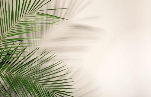 swiezy-tropikalny-daktylowy-palmowy-lisc-na-lekkim-tle