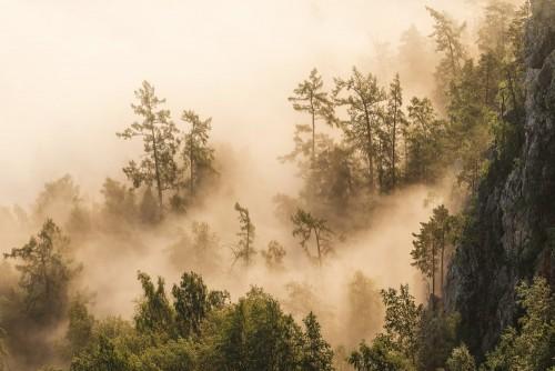 drzewa-w-lesie-z-gesta-mgla-lub-mgla