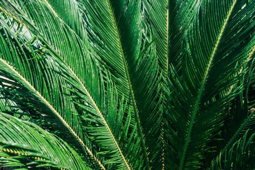 liscie-palmowe-streszczenie-tropikalny-tlo