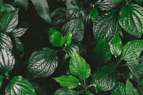natury-tla-mieszkania-lay-zieleni-lisc-z-rocznika-filtrem