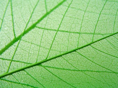 szczegoly-zielonych-lisci