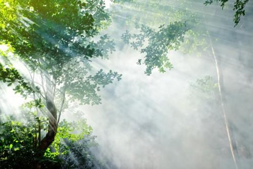 piekny-poranek-w-tropikalnym-lesie