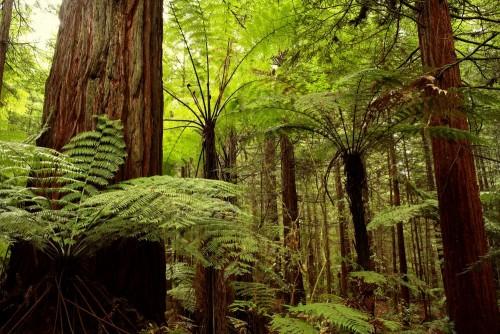 zielony-las