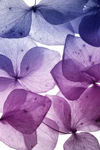 kolorowe-platki-kwiatow
