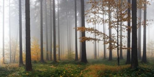 mglisty-las-jesienia-po-deszczu