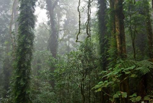 las-deszczowy