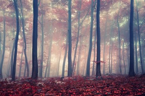 mistyczny-las