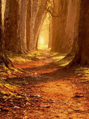 magiczna-sciezka-przez-jesienny-las