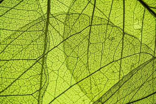 zielona-lisc-tekstura-w-szczegolach