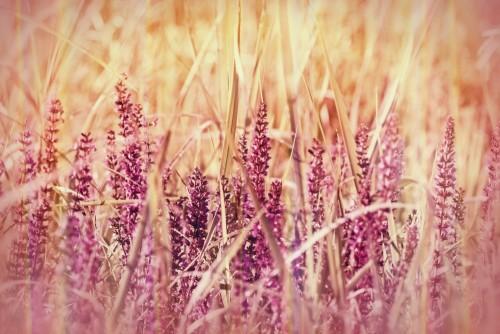 dziki-fioletowy-kwiat-w-trawie