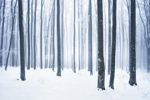 scena-zimowa-osniezony-las