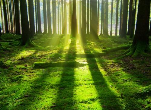 swiatlo-i-cien-w-zielonym-lesie