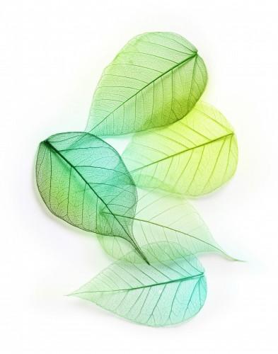 zielone-liscie-makro