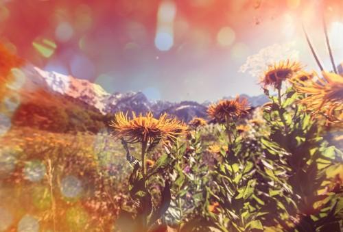 kwiaty-rosnace-na-gorskiej-lace-zdjecie-w-stylu-retro