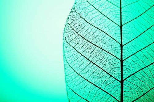 zredukowany-lisc-na-zielonym-tle-zamyka-up