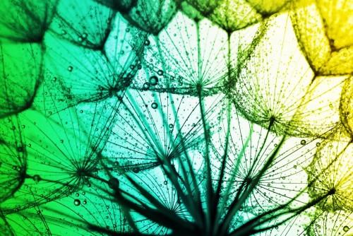 bliska-dandelion-na-kolorowym-tle