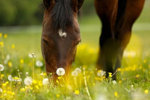wypas-koni
