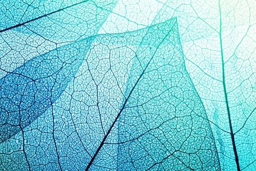 makro-opuszcza-teksture-tla