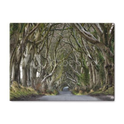 dark-hedges-irlandia-polnocna
