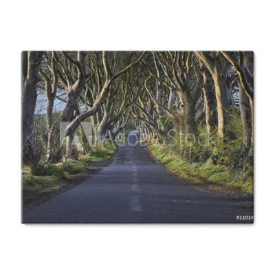 the-dark-hedges-w-poblizu-ballymoney-irlandia-polnocna