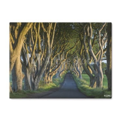 the-dark-hedges-irlandia-polnocna